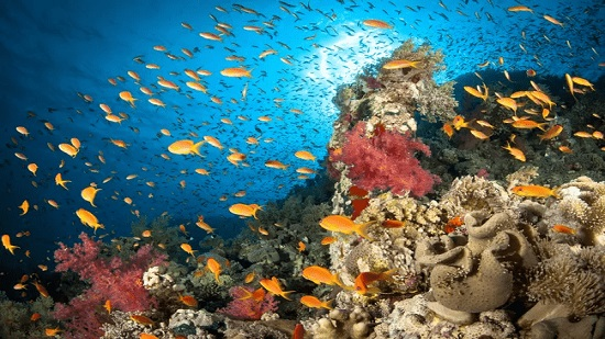 Red Sea's coral reefs face existential threat from overfishing